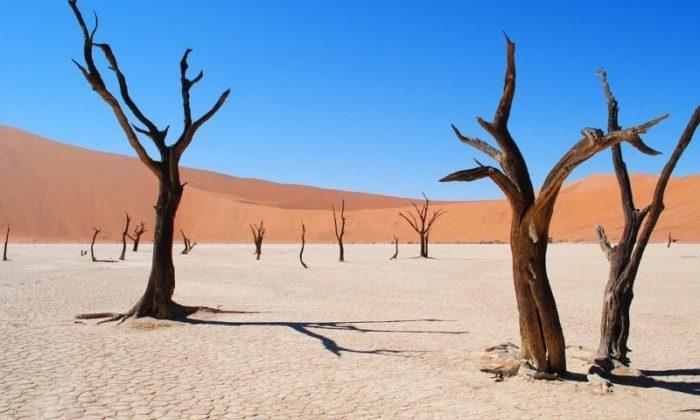 Ölü Vlei -Namibiya