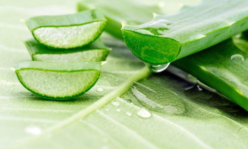 Aloe bitkisi və faydaları