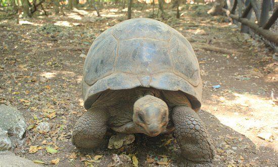 Çanqu adası-nəhəng tısbağalar